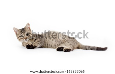 Cute baby tabby kitten laying down on white background - stock photo