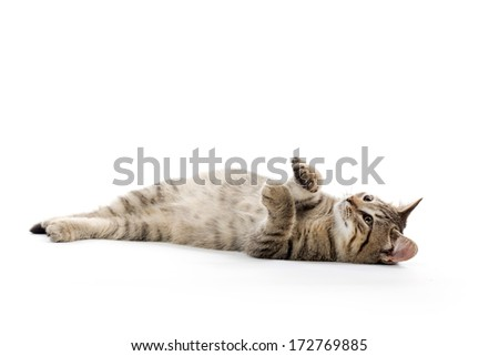 Cute baby tabby kitten laying down on white background