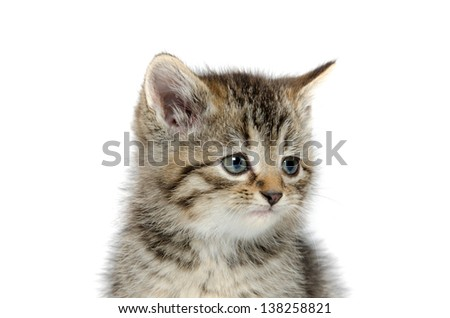 Cute baby tabby kitten on a white background - stock photo