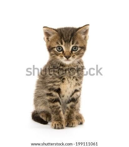 Cute baby tabby kitten on white background - stock photo