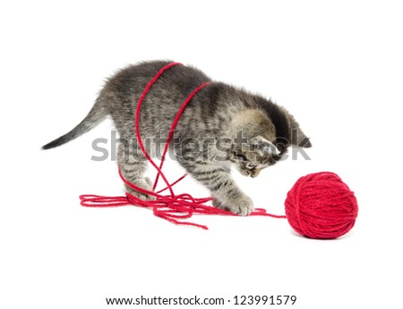 Cute baby tabby kitten playing with red yarn on white background - stock photo