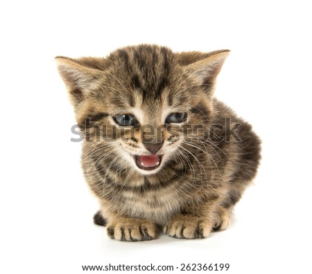 Cute baby tabby kitten resting on white background - stock photo