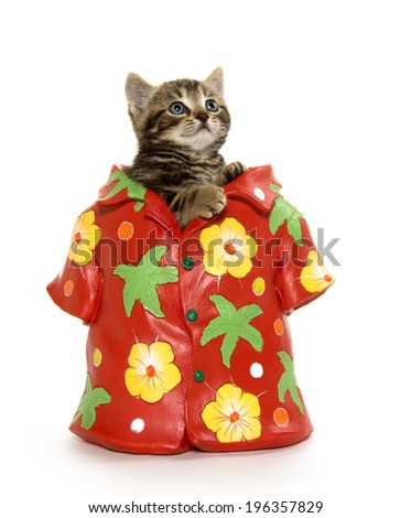 Cute baby tabby kitten sitting in flower pot decorated like Hawaiian shirt