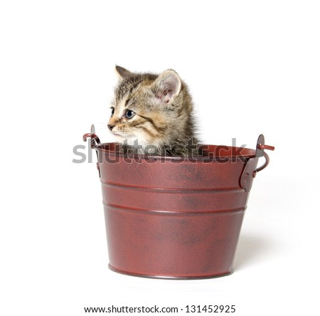 Cute baby tabby kitten sitting inside of pale on white background