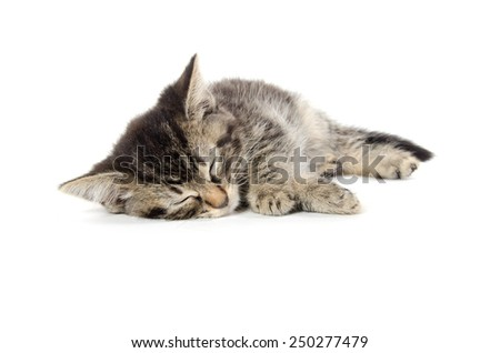 Cute baby tabby kitten sleeping and isolated on white background