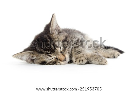 Cute baby tabby kitten sleeping and isolated on white background - stock photo