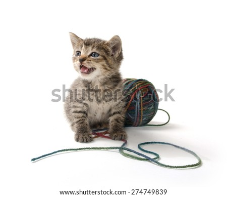 Cute baby tabby kitten with ball of yarn isolated on white background - stock photo