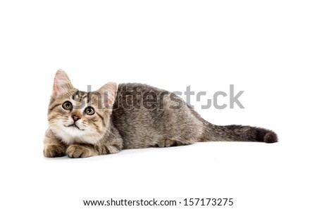 Cute baby tabby short hair kitten laying down on white background