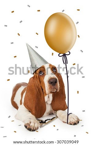 Cute Basset Hound dog wearing a party hat holding a gold color balloon with confetti falling from the sky - stock photo