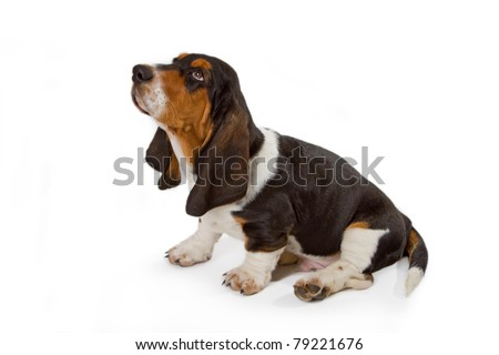 Cute basset puppy on white background - studio shot. - stock photo