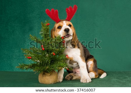 Cute Beagle puppy with christmas tree, on green background