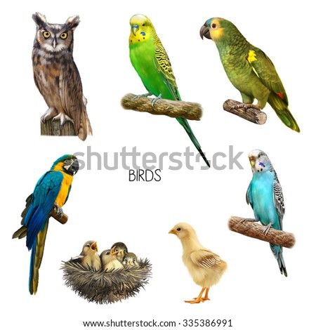 Cute Beautiful green Parrot, Colorful blue parrot macaw. Bright green blue Budgerigar sitting, baby chick, owl. Illustration Isolated on white background. - stock photo