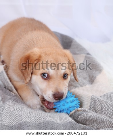 Cute beige puppy playing on white carpet, on light background - stock photo