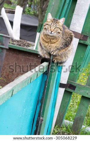 Cute big tabby cat sitting on the metal crate in the garden. - stock photo