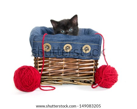 Cute black American shorthair kitten inside of basket with red yarn on white background - stock photo