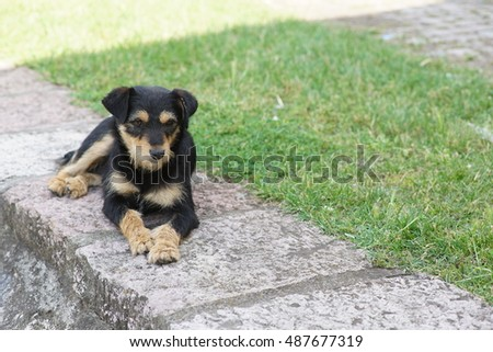 Cute black and brown stray dog lying on the ground outside.