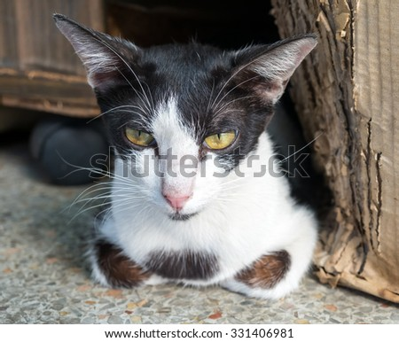 Cute black and white adult cat lay comfort in outdoor corridor, selective focus on its eye