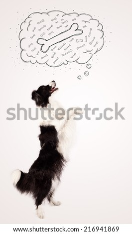 Cute black and white border collie dreaming about a bone in a thought bubble - stock photo