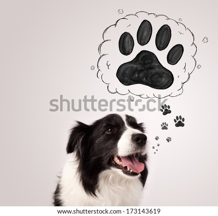 Cute black and white border collie thinking about a paw in a thought bubble above her head - stock photo