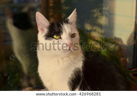 Cute black and white cat, indoor photo