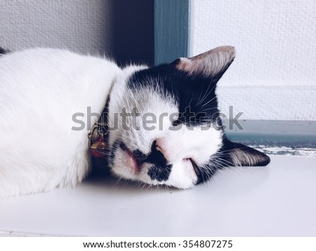 Cute black and white cat is sleeping on the floor. Sleeping cat.