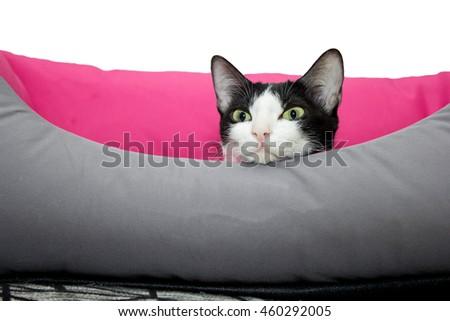 Cute black and white Cat laying on a cat bed - stock photo