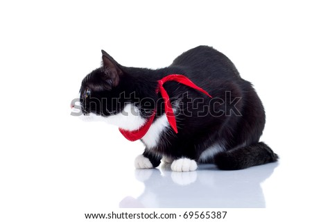 cute black and white cat  ready for attack , side view