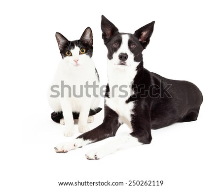 Cute black and white color dog and cat sitting together - stock photo