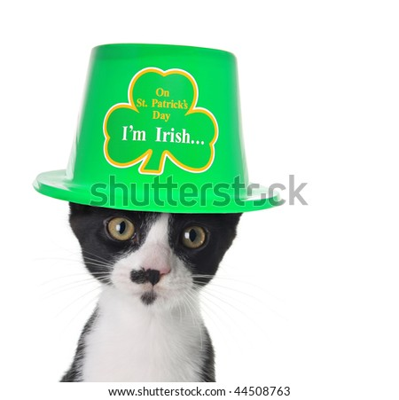Cute black and white kitten wearing a St Patricks day hat. - stock photo