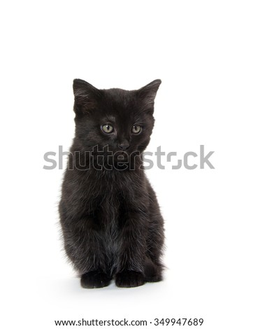 Cute black baby kitten isolated on white background
