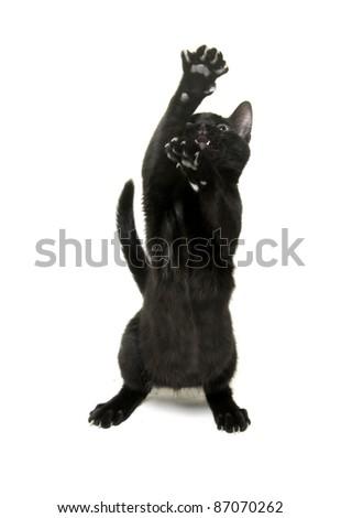 Cute black cat on white background - stock photo