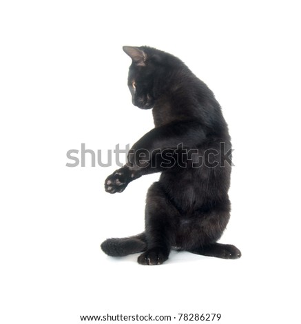 Cute black cat playing and jumping on white background - stock photo