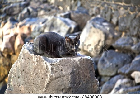 cute black cat sitting on a rock - stock photo