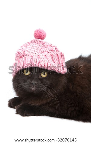 cute black cat wearing pink cap isolated - stock photo