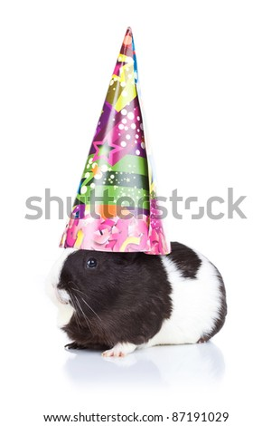 Cute black guinea pig wearing a party hat - stock photo