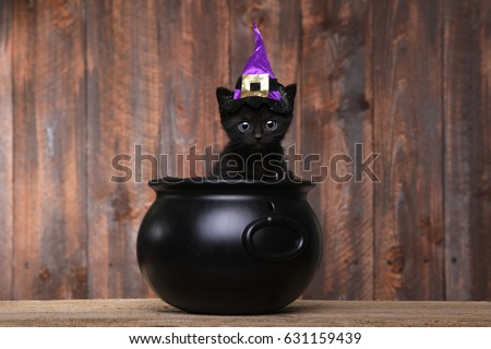 Black Cat Halloween Stock Images, Royalty-Free Images & Vectors ...