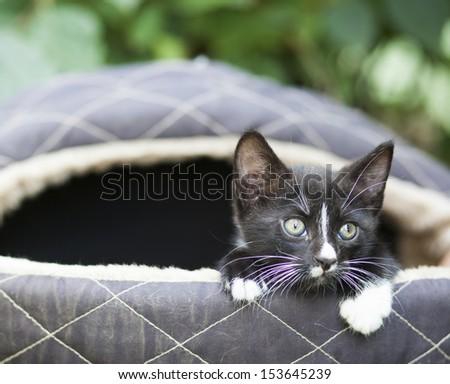 Cute black kitten - stock photo