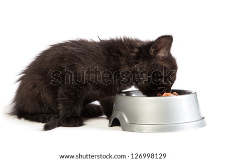Cute black kitten eating cat food, isolated on  a white background - stock photo