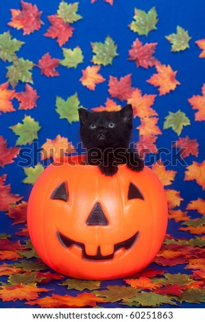 Cute black kitten in plastic jack-o-lantern  with fall leaves on blue background