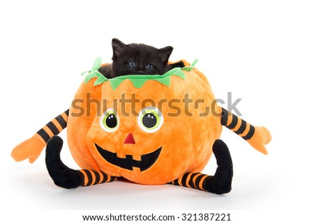 Cute black kitten sitting inside of halloween decoration shaped like a pumpkin isolated on white background - stock photo