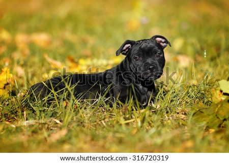 Cute black puppy lying in the grass - stock photo