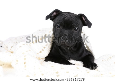 Cute black puppy on a white background - stock photo