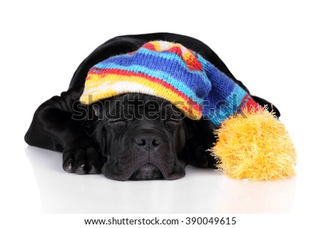 Cute black puppy sleeping on a white background, wearing a hat