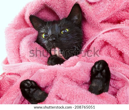 Cute black soggy cat licking after a bath, drying off with a towel - stock photo