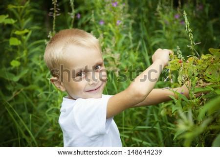 Cute blond boy picking raspberry in summer forest - stock photo