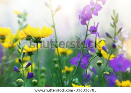 cute blooming flowers in a meadow - stock photo