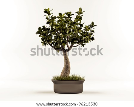 cute bonsai isolated on white background