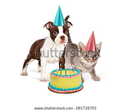 Cute Boston Terrier puppy and little kitten standing together wearing blue and pink party hats with a birthday cake with lit candles in front of them - stock photo