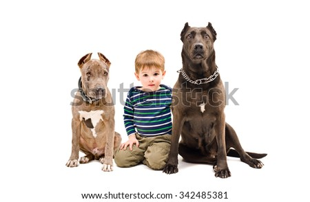 Cute boy and two pit bulls sitting together isolated on white background - stock photo