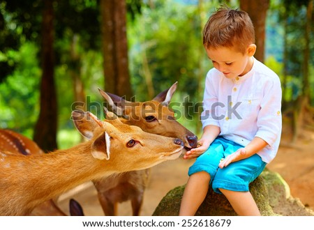 cute boy feeding young deers from hands. focus on deer - stock photo